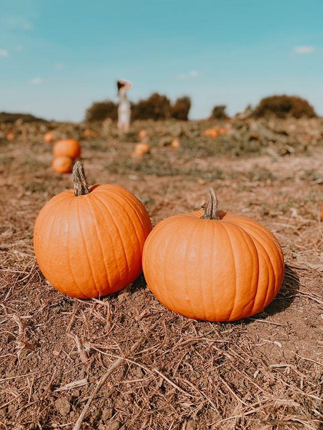 themillenialrunaway PYO Pumpkins